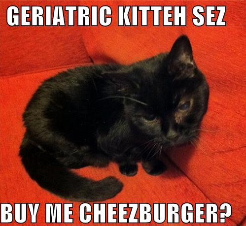 Buy me, Cheezburger, or the cat starves!